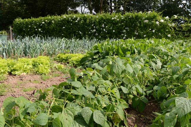 Gite en Bretagne : le potager